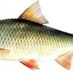 zaneta-na-ryby-ploc